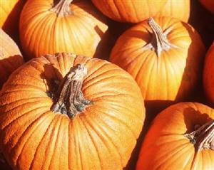 Thank you to Hannaford in Bedford for Donation of Pumpkins!
